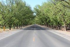 胡桃树丛 库存照片