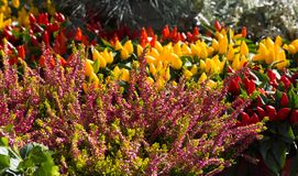 胡椒厂在花市场上 图库摄影