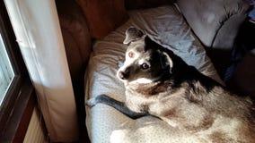 胡椒狗在阳光下 库存图片