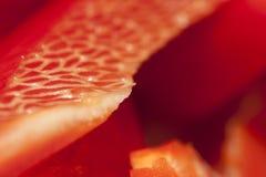 胡椒红色 库存图片