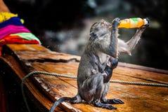 胡闹与在一条木小船的小狗喝从瓶的 免版税库存图片