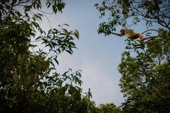 胡闹跳跃从树通过空气 库存图片
