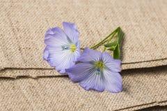 胡麻-在一件亚麻制纺织品的亚麻制花 免版税库存照片