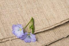 胡麻-在一件亚麻制纺织品的亚麻制花 免版税库存图片