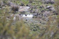 胡说的溪,在Lamoille峡谷的Lamoille小河 免版税库存照片