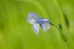 胡麻蓝色花在领域开花 免版税库存图片