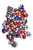 胰岛素分子 图库摄影