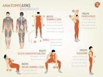 胳膊workoutbiceps美丽的设计信息图表  库存图片