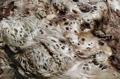 胶被风化的木头 免版税库存图片