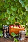 胶靴和篮子用苹果 免版税库存图片