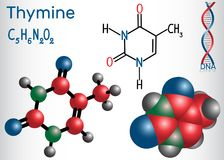 胸腺嘧啶Thy -嘧啶nucleobase,基本元件 向量例证