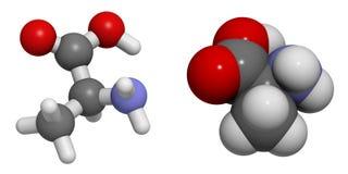 胺基代丙酸(丙氨酸, A)分子 免版税库存照片