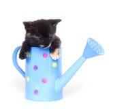 能小猫浇灌 图库摄影
