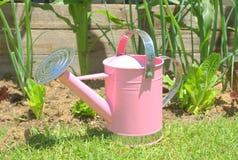 能庭院粉红色菜浇灌 免版税库存照片