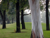 能森林看到t结构树 免版税库存照片