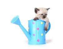 能逗人喜爱小猫浇灌 免版税库存图片