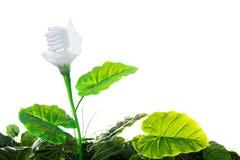 能量概念,接地友好的轻的鳞茎植物,在白色 图库摄影