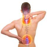 脊椎痛苦-在白的真正的解剖学隔绝的男性疼的中坚 库存图片