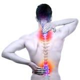 脊椎痛苦-在白的真正的解剖学隔绝的男性疼的中坚 免版税库存图片