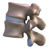 脊椎的部分 皇族释放例证