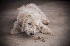 脏狗 库存图片
