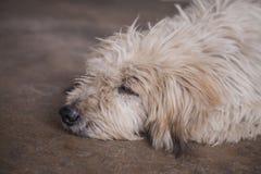 脏狗 免版税图库摄影