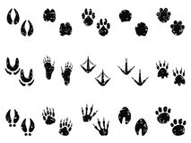 脏的动物脚印轨道象 库存照片