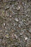 脏的树干吠声纹理,详细的垂直的织地不很细样式,布朗灰色背景宏指令特写镜头 免版税图库摄影