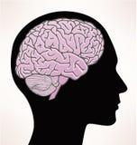 脑子人例证 免版税库存照片