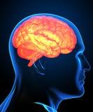 脑子人力光芒x 库存例证