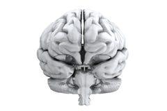 脑子人 免版税库存图片
