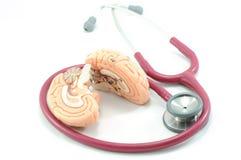 脑子听诊器 库存照片