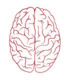 脑子商标剪影顶视图设计传染媒介模板 突发的灵感认为想法略写法概念象 皇族释放例证