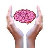 脑子在手中 库存照片