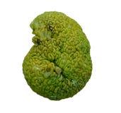 脑子塑造了绿色果子, Maclura pomifera (叫作哇洒琪橘) 免版税图库摄影