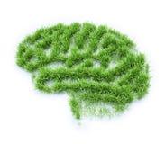 脑子形状的草补丁 库存图片