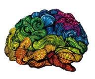 脑子想法例证 乱画关于人脑的传染媒介概念 与色的脑子和灰色的创造性的例证 库存照片