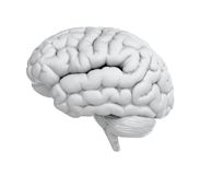 脑子白色 库存图片