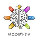 脑子的剪影在白色背景的 免版税图库摄影