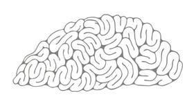 脑子的剪影 免版税库存照片