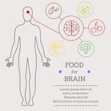 脑子的食物 皇族释放例证