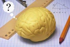 脑子研究 库存照片