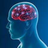 脑子神经元突触作用 皇族释放例证