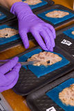 脑子考试在实验室 库存照片