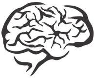 脑子高res 库存照片