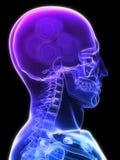 脑子齿轮 库存例证