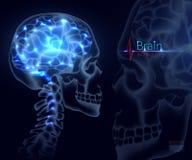 脑子,医学的传染媒介 脑子、记录脑部活动和表现的头骨射击,神经网络, 库存例证