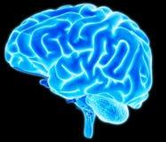 脑子细节 免版税库存照片