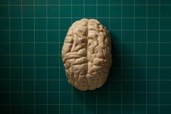 脑子 库存照片