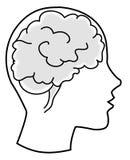 脑子bw 库存图片